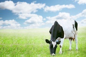 A spotlight on agribusiness in Queensland