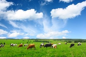Queensland's agriculture industry to be doubled by 2040